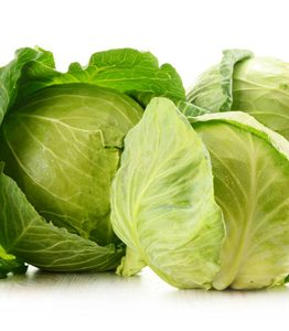 cabbage-wholesale