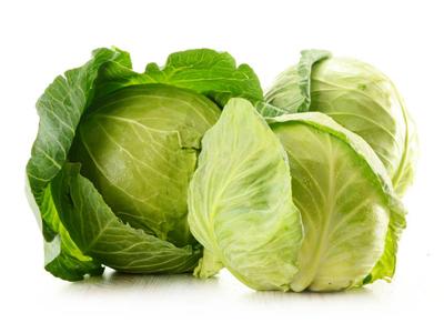 cabbage-wholesale